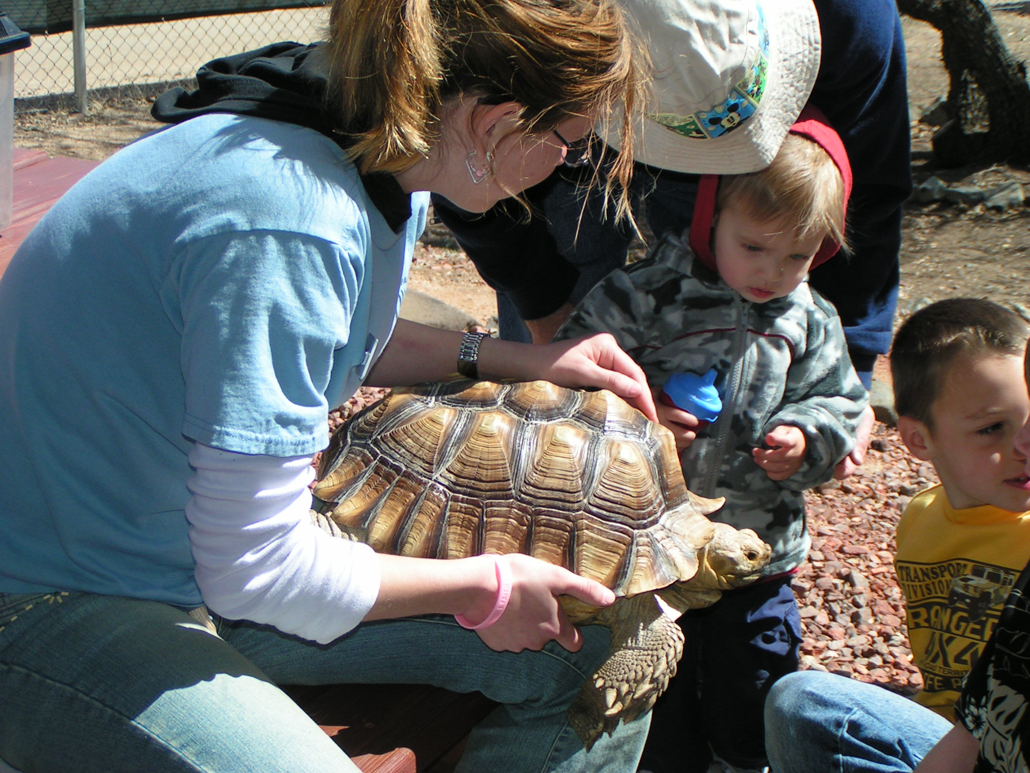 docent with tortoise