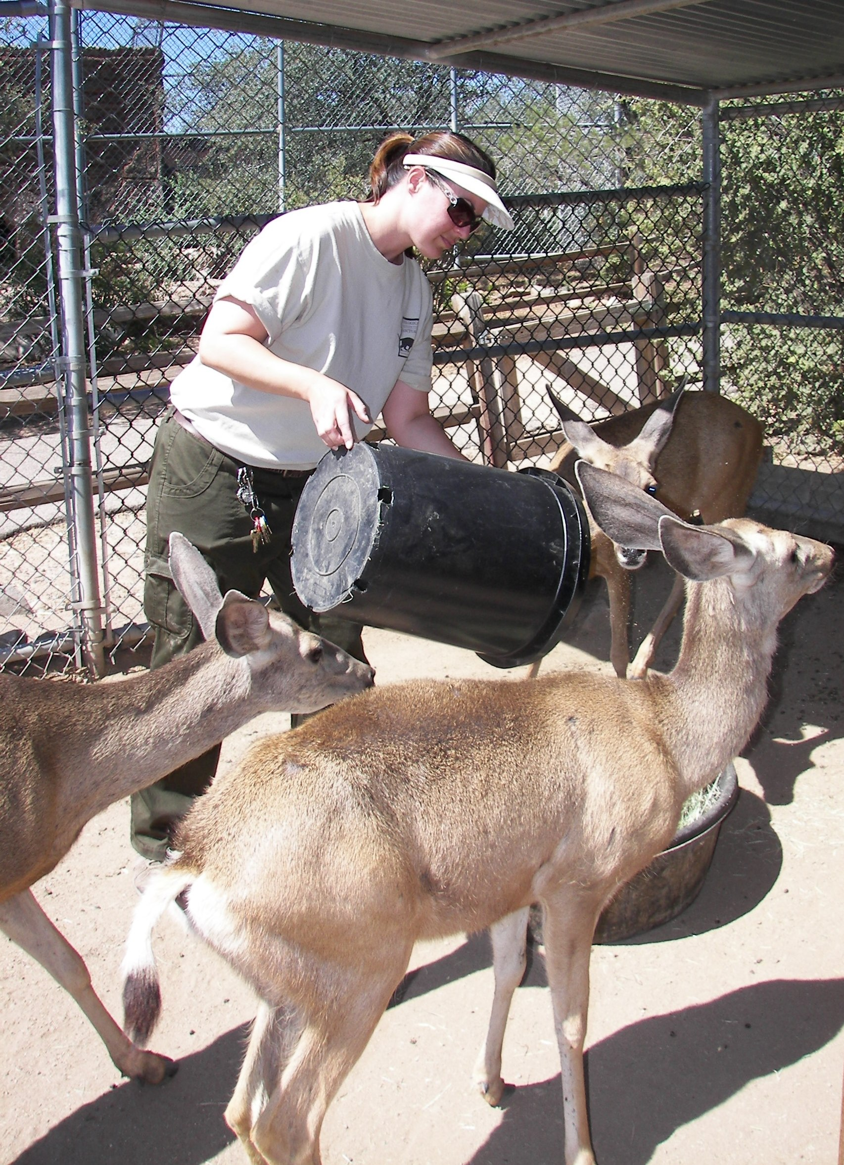 heather e feeding the deer